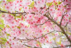 新芽と花と