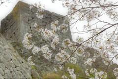 荒城の桜 - 昔の光 今いずこ -