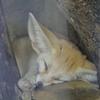 バイオパークの生き物たち
