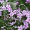 芝桜フレーバー ♬