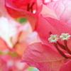 夏を告げる花