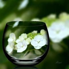 紫陽花フレーバーのお茶、グラスで冷やしてみようかしら ♪