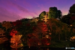 金色に輝くジパング東京 ♪