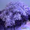 雪の華 ❤