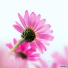 お花のB面