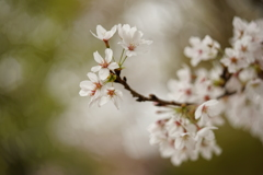 桜パワー満開 ♪