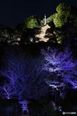 夜桜のライトアップを独り占め♪