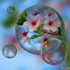 シャボン玉コーティングで桜をお届けします ♪