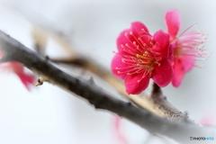 見頃は咲き始め・・・♪