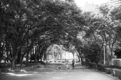 公園の通り道