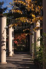 昼下がりの花園
