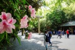 春の熱田神宮