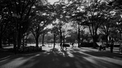 夕暮れの公園