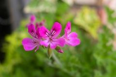 街角の小さな花