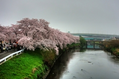雨天の花見