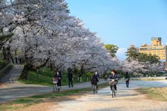 自転車で桜