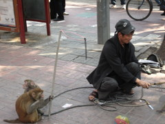 路上の猿回し  中国
