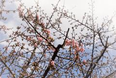 咲いている雰囲気を撮ってみた