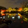 池のライトアップ