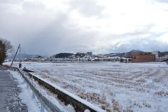 珍しく雪が降りました #1