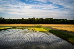 水田と麦畑