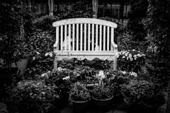 囲まれた椅子