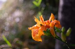 散歩道のお花