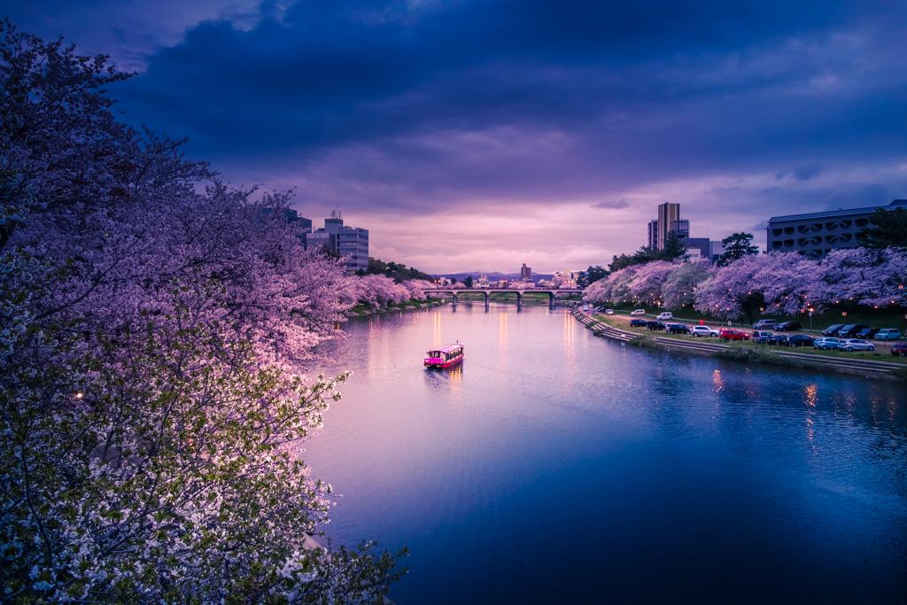 春の乙川 夕景 1