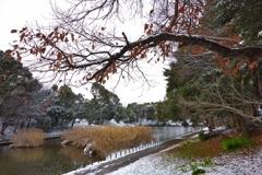 珍しく雪が降りました #2