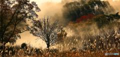 朝霧と陽光