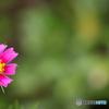 花びらが短い;