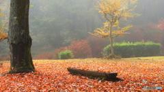 霧中の公園