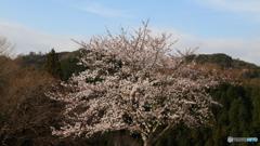 桜定番撮影地にて(3)
