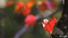 小さな秋見つけた