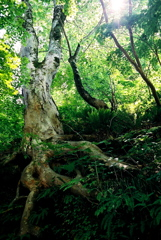 森に生きずく