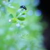 water piants 2
