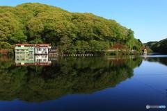 春の円良田湖