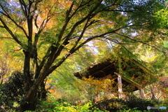 慈光寺の秋