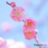 春だね^^