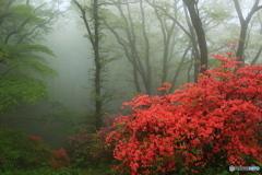 霧に包まれて②