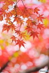 煌めきの季節