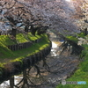氷川橋の春4