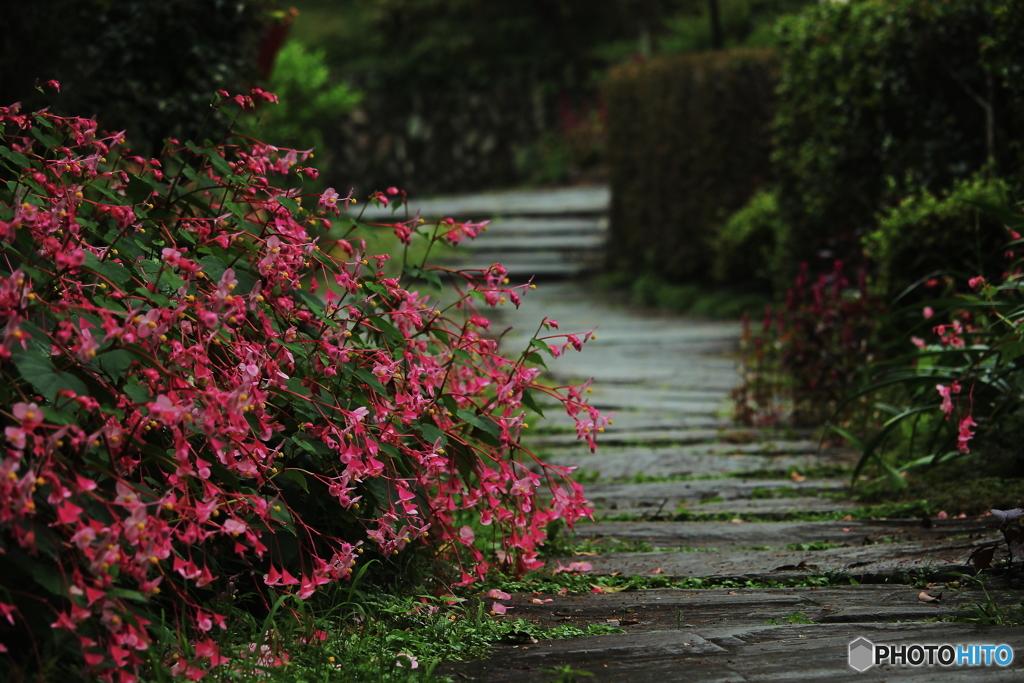 雨上りの参道