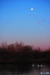 月の見える朝