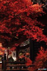 秋の多聞院