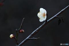 春の香りに誘われて*