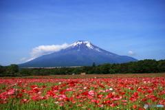 青い空と赤い絨毯