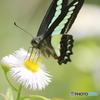 蝶の舞う季節