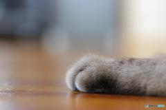 *猫の手を借りてみました*