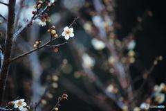春の訪問者